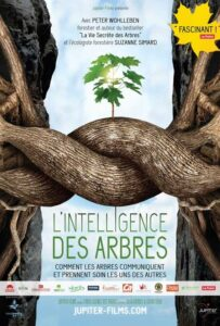 L'intelligence des arbres - Jupiter Films